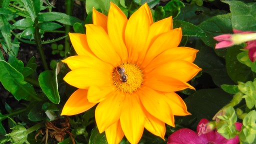 Close up of yellow flower with a bee